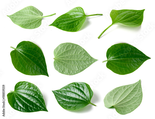 Green betel leaf heart shape isolated on white Canvas Print