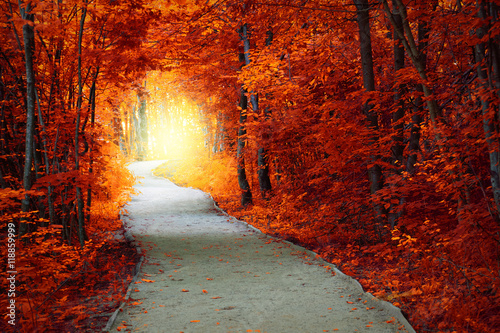 Foto op Canvas Herfst Fantastic Autumn forest with path and magical light