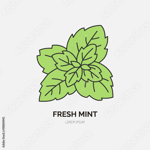 modern vector flat icon of mint leaves fresh food logo flat symbol