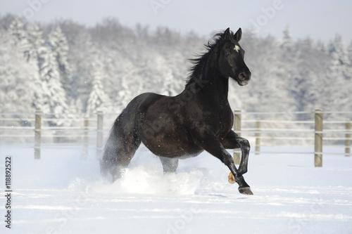 Galoppierendes Pferd im Schnee