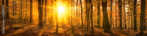 Foto op Plexiglas Oranje Wald Panorama im Herbst mit Sonnenschein
