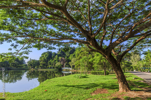 tree in public park at Phang Nga Province in south Thailand Fototapeta