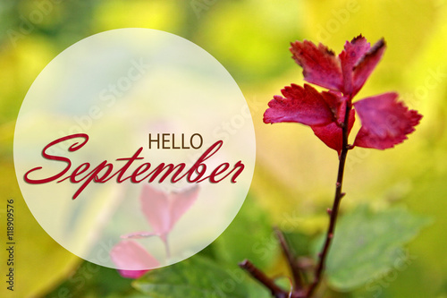 Hello September Wallpaper Autumn Background With Red Leaves