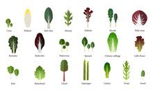 Set Of Salad Bowl. Leafy Veget...