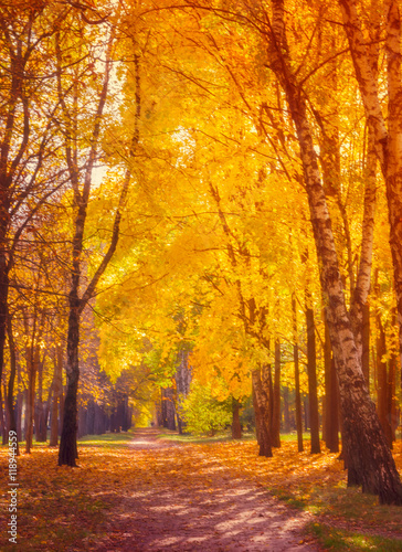 Papiers peints Forets Autumn. Fall scene.