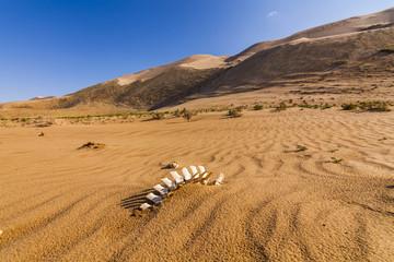 Fototapeta na wymiar White bones in the desert sands.
