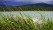 green grass swaying at the wind on lake and mountain background