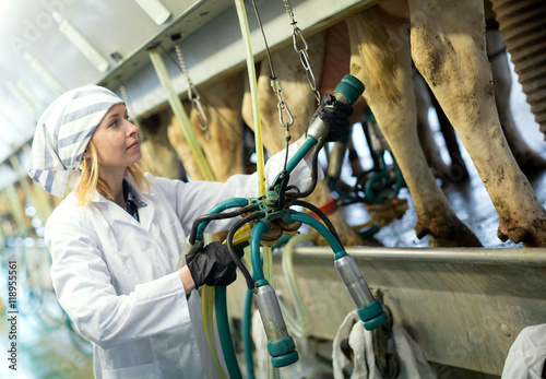 Fotografie, Obraz  Female technician working with milking machines