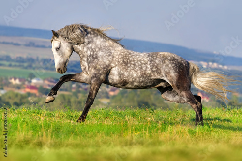 Photo  Beautiful grey andalusian horse with long mane run gallop against mountain view