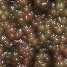 Slimy Organic Tissue 3d Rendering