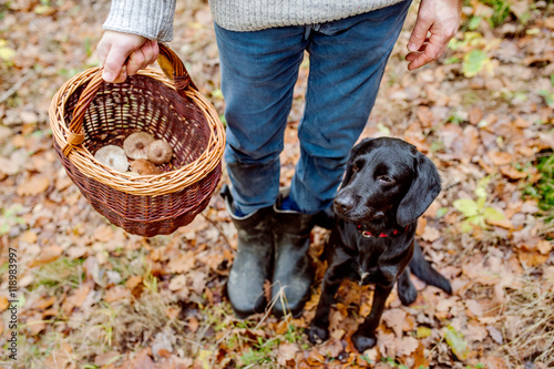 Fotografie, Obraz  Unrecognizable man with dog holding basket with mushooms, forest