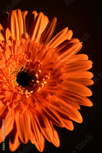pretty flower on an orange background, close-up