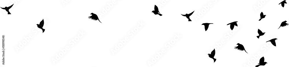 Fototapeta Bird flying silhouette vector on a white background