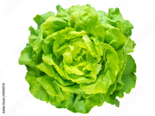 Green lettuce salad head
