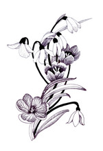 Sketched Snowdrops Flowers On ...