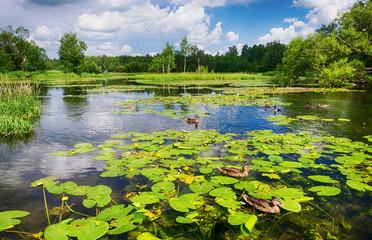 Krajolik, jezero s rascvjetanim lopočima