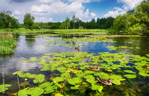 Montage in der Fensternische Wasserlilien Landscape, a lake with blooming water lilies