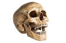 The Angle Skull Model In Open ...