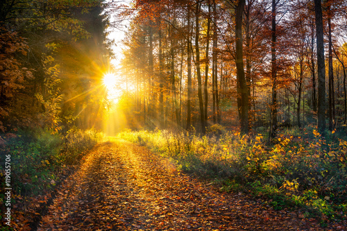 Canvas Prints Road in forest Wald im Herbst