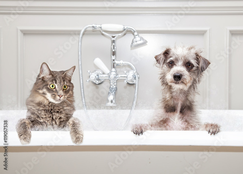 Fényképezés  Dog and Cat in Bathtub Together