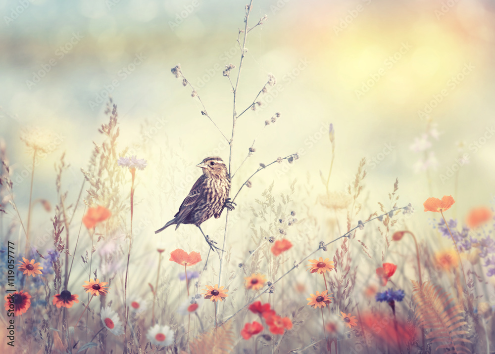 Fototapety, obrazy: Field with wild flowers and a bird