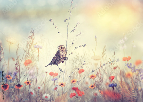 Field with wild flowers and a bird - 119057777