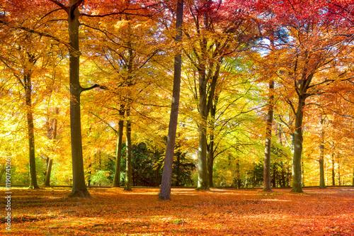 kolorowi-jesien-liscie-w-lesie