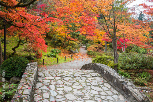 Fall Color Landscape with Stone Bridge and Walking Path