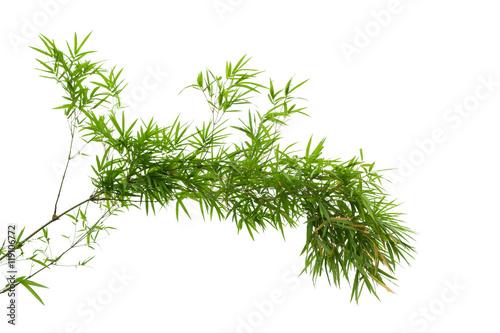 Montage in der Fensternische Bambus bamboo tree branch isolated on white background