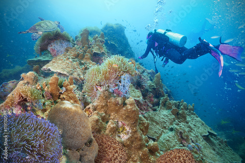 Poster Coral reefs Divers and coral reef