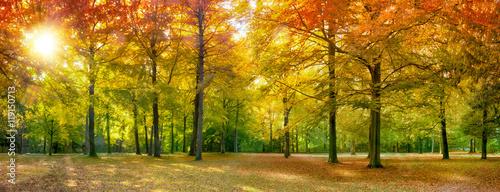 Naklejka Bunter Herbstwald im Sonnenlicht