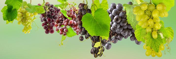 Fototapetagrappes de raisins