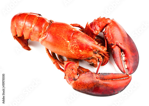 Poster Coquillage Red lobster isolated on white background
