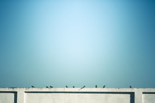 Nine Sparrow On The Wall With Sky Background