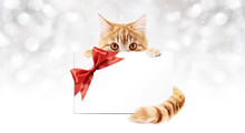 Ginger Cat With Gift Card And Red Ribbon Bow