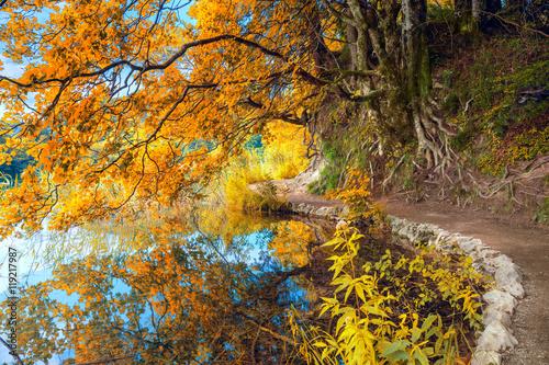 Photo sur Aluminium Cappuccino Autumn Landscape - Big Yellow Tree and lake in park