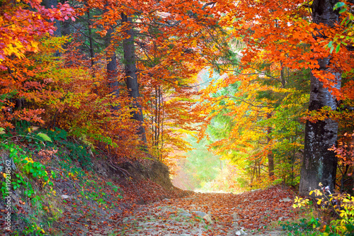 Poster Diepbruine Amazing Autumn Fall Leaves colors in wild forest landscape