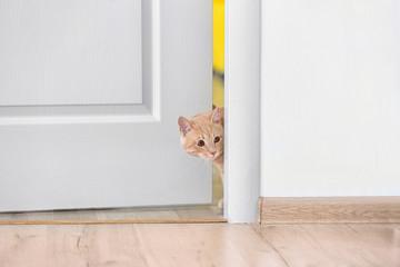 Curious cat entering room