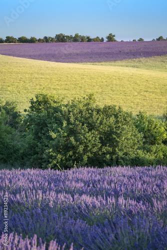 Aluminium Prints Violet Provence landscape