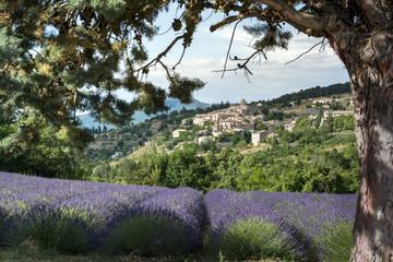 Fototapeta Lawenda Aurel little village in south of France