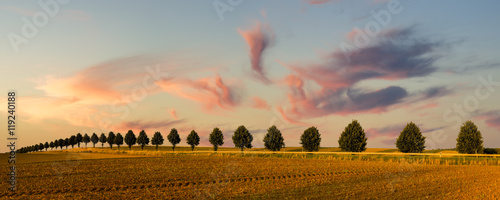Poster Taupe Lato na wsi,krajobraz wiejski