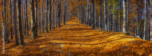 Poster Marron chocolat Wide alley with colorful autumnal beech trees in the Beskidy Mountains in Poland.