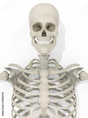 Garden Poster Sweet Monsters Human anatomy skeleton medical illustration on white background. 3d illustration.