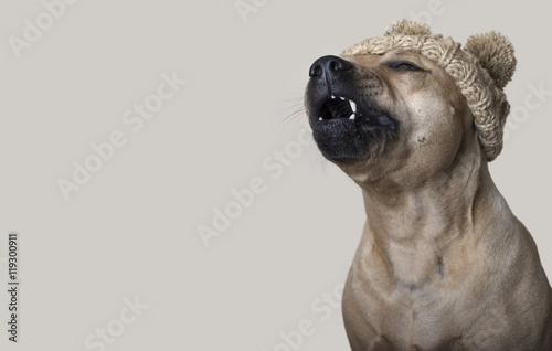 Poster Dog schattige pratende hond met gebreide muts, copy space