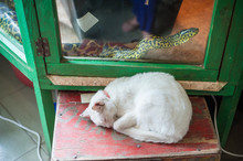 White Cat Sleeps, Snake Creeps