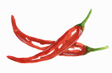 Watercolor Chili Peppers. Spicy And Fresh Chili. Healthy And Tasty Vegetable With Vitamins.