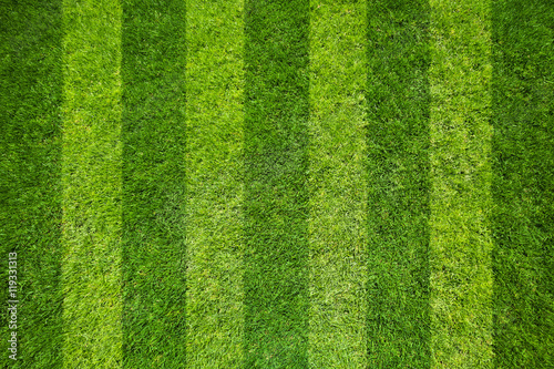 Photo sur Aluminium Herbe grass