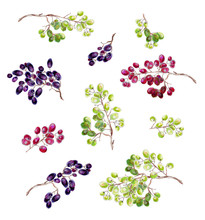 Bunches Of Grapes On A White Background.