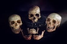 Skulls Head Still Life