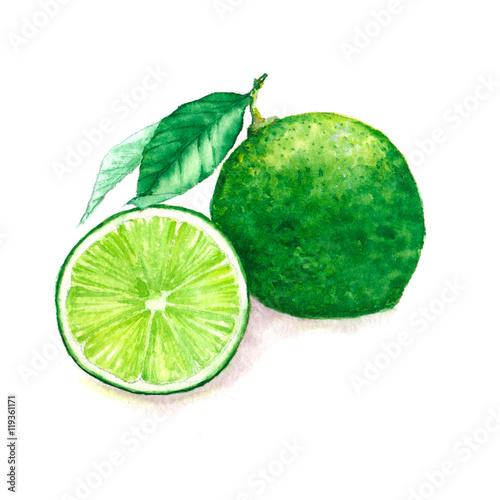 ilustracja-limonek-na-bialym-tle